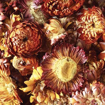 Natural Dried Sunflowers 50g
