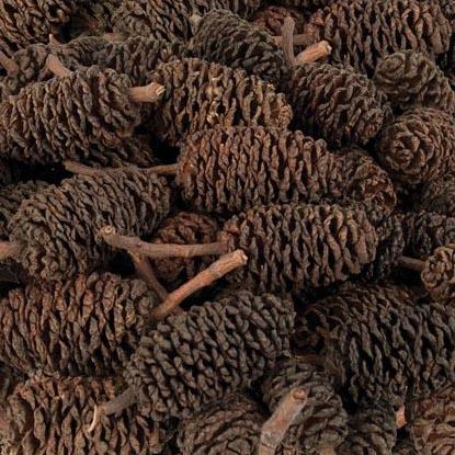 Natural Bud Cones