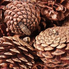 Pine Cones 200g. Perfect for christmas decorations.