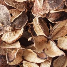 Dried Seedless Cotton Pods