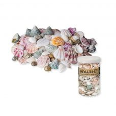 Natural Sea Shells